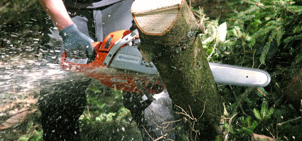 Chainsaw Equipment Selector Guide